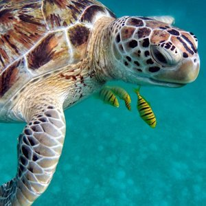 Sea Turtle | Dental Tourism in Cost Rica